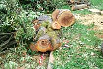 LIDÉ hořekují především nad vykácením oblíbených sakur. Šestici ale nahradí hned 69 nových stromů.