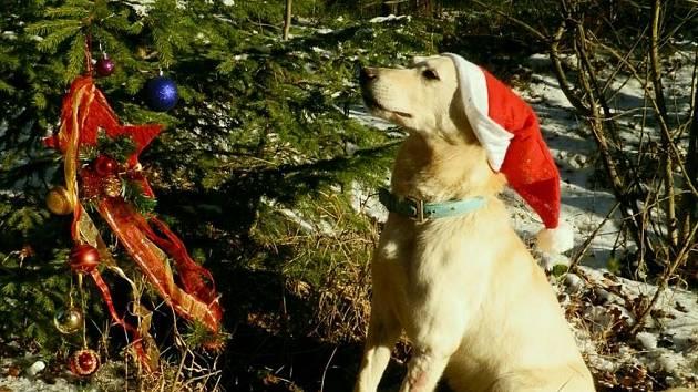 FENKA Aida už bude trávit Vánoce v novém domově. V záchytném zařízení ale čekají na pohlazení další psi a kočky.