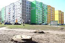 LIDÉ v Sokolově se ptají, proč mizí z města stromy. Město se hájí, k zemi údajně padají jen nemocné stromy.