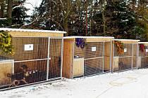Vránov rozsvítí vánoční stromek pro opuštěné psy a kočky