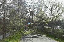 V Sokolově padl vzrostlý strom na cyklostezku a zasáhl procházející ženu se dvěma dětmi.