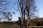 Z bývalých stavení vyrůstají stromy, Mordhof.
