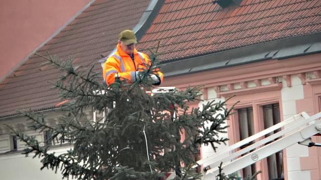 Vysloužilé vánoční stromky poslouží na hřbitově i do záhonků s městskou zelení
