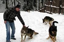 PRO PSY z útulku je hodně důležitý pravidelný pohyb. Ten si dopřávají ve výběhu, kde skotačí i několik hodin. Na snímku je redaktor Sokolovského deníku Milan Hloušek, který psy dostal krátce na povel.