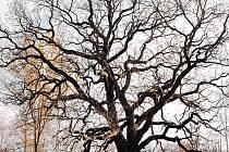 Bambasův dubjepamátný stromna louce u bývaléhozámečku Spiegelu silnice nedalekoArnoltovana severozápadní hraniciCHKO Slavkovský les.