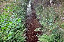 Mezní potok je menší horský tok v Krušných horách na Sokolovsku.