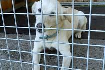 SEMINÁŘE mají naučit majitele řešit problémy se psy jinak než umístěním do útulku.