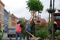 Zeleň na Starém náměstí v Sokolově