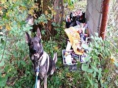 Policejní pes Garrit přivedl policisty až ke kradeným věcem. Schované byly v blízkosti potoka.