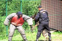 UKÁZKU zadržení pachatele dovezli na Vránov policejní psovodi ze Sokolova. Předvedli i psa, který získal ocenění za největší počet zadržených osob v loňském roce.