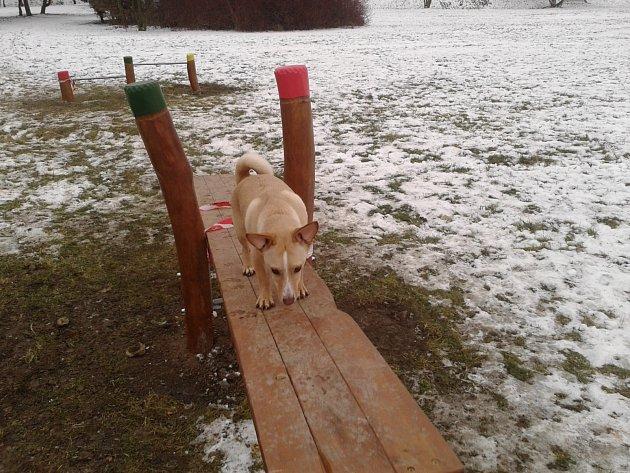 Sokolovské hřiště pro psy