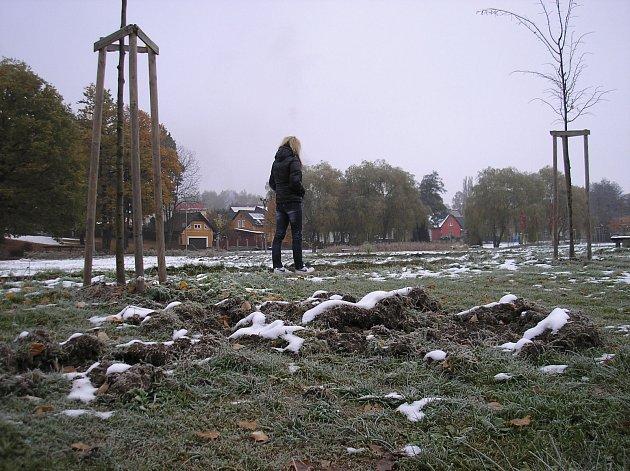 Park v Dolním Rychnově se stal v posledních dnech útočištěm divokých prasat