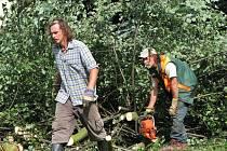 Celkem 37 stromů nechalo včera město Habartov pokácet na sídlišti v Gagarinově ulici.