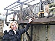 Dočasný útulek pro kočky v Sokolově