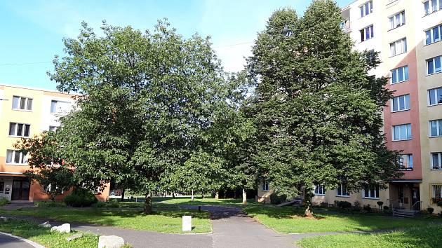 Lidem nejvíce vadilo kácení stromů.