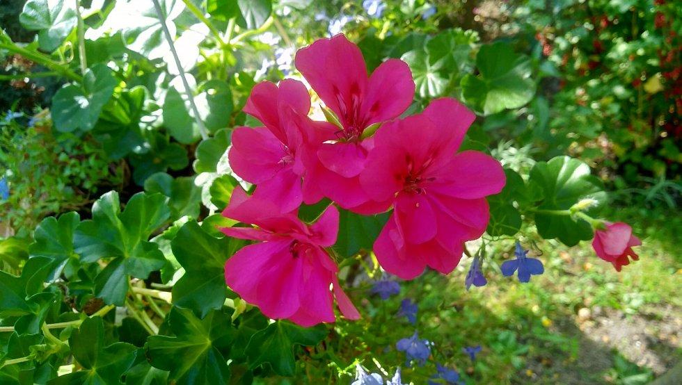 Na řadě míst začaly v hojném počtu růst květiny.