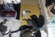 Dosavadní azyl sokolovských koček je v maringotce