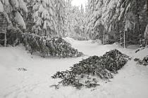 Na bílé stopy popadaly stromy.