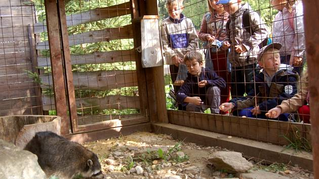 Záchranná stanice handicapovaných živočichů Drosera v Bublavě přivítala kraslické školáky, kteří si prohlédli zvířata v prezentačních voliérách. Piškoty přitom nakrmili mývalí rodinku.