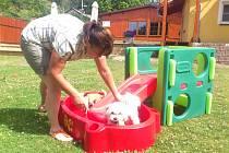 Kromě výcviku je zvířatům k dispozici také stylový bazének