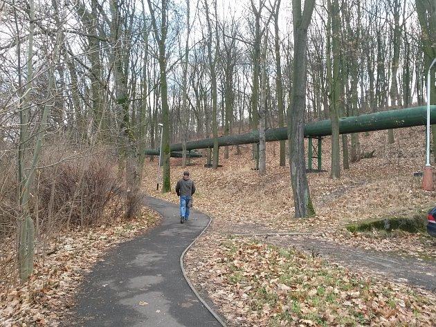 Zanedbaný lesík se má změnit na odpočinkovou zónu.