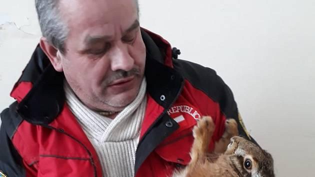 První zajíc, kterého Karel Bobál odvezl z věznice.