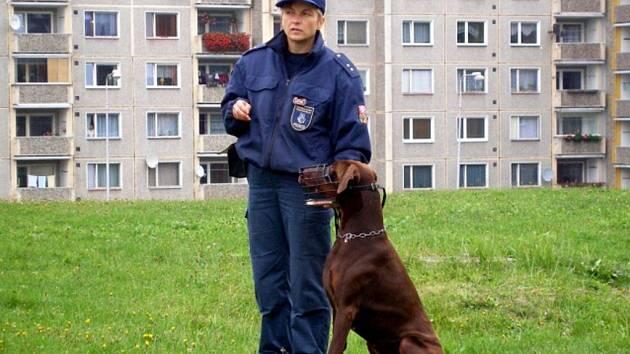 VÝCVIK. Vězeňská služba z Kynšperku předvedla ukázku výcviku služebních psů různých plemen v rámci zářijové akce Sokolove, na kolo.