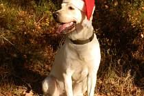 VÁNOCE pro opuštěné psy a kočky proběhnou i letos na ranči Vránov u Sokolova. Konají se 20. prosince.