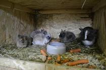 Zoologickou zahradu v Klingenthalu potěšila pomoc sousedů z Kraslic.