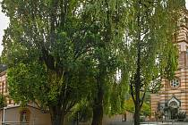 Císařské duby v Kraslicích jsou dva památné stromy.