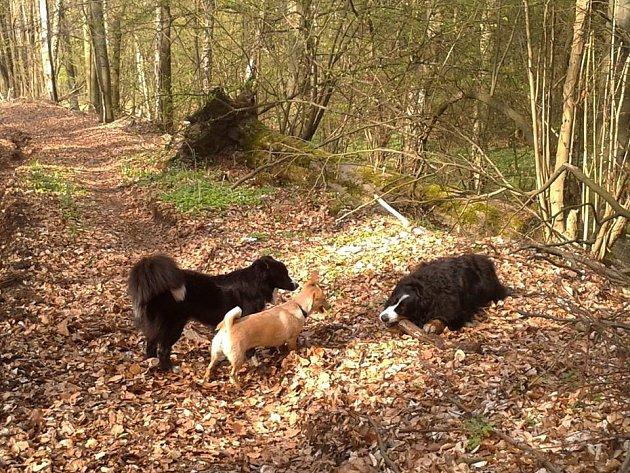 Les v Březové. Ilustrační foto