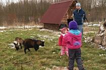 ATRAKCE. Na dětské návštěvníky čeká na statku Bernard překvapení. V zookoutku se totiž zabydlely zakrslé kozy.