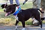 Pes, který v Habartově napadl dvouleté dítě.