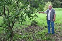 ZAHRÁDKÁŘ Jan Novák ukazuje na svoji zpustošenou zahradu, kterou mu rozryla divoká prasata.