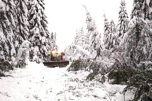 V lesích v bílé stopě je to stále nebezpečné. Hrozí tam pády stromů.