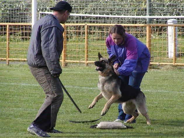 Na sídlišti bude připravená ukázka výcviku psů.