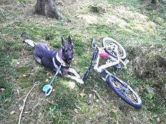 Policejní pes Garrit vystopoval v hluboko v lese odcizené jízdní kolo.