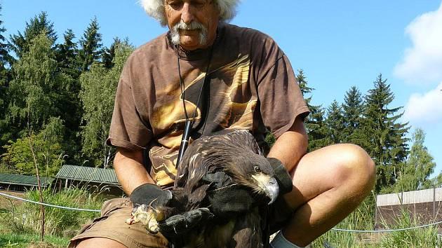 ZRANĚNÉ MLÁDĚ, zřejmě pytlákem, skončilo v Záchranné stanici handicapovaných živočichů Drosera v Bublavě. Do volné přírody se už nevrátí, neboť opeřenec by si už sám neulovil potravu.