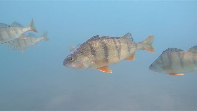 Podvodní svět jezera Medard, jak je zachytil potápěč.