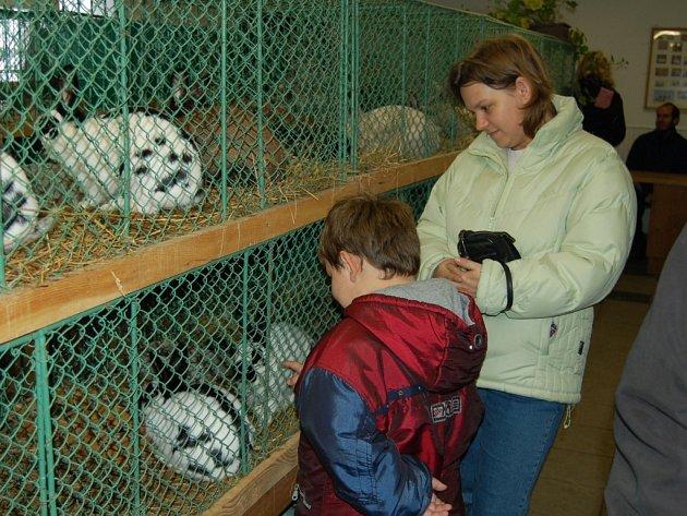 Výstava králíků, holubů a drůbeže v Chodově.