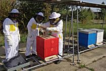 Odsouzení se věnují včelám