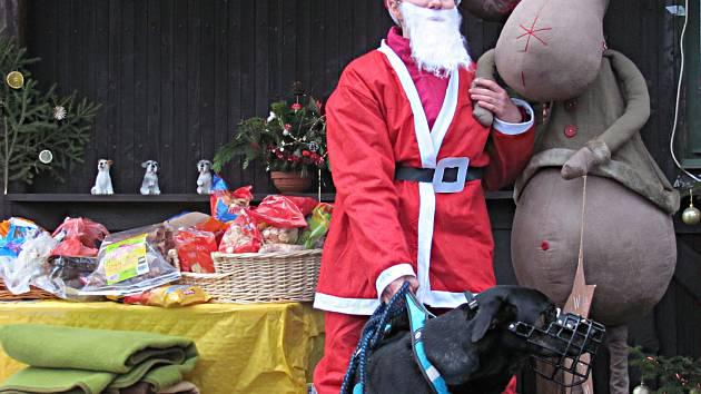 Vánoce pro pejsky  v útulku na Vránově využili lidé k tomu, aby opuštěným psům přinesli dárky pod stromeček, vyvenčili je anebo si tu třeba vybrali nového parťáka do rodiny.