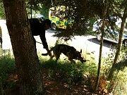 Policie pátrá po možném pachateli násilného trestného činu