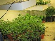 V bytě v Novém Sedle byla odhalena indoorová pěstírna konopí.