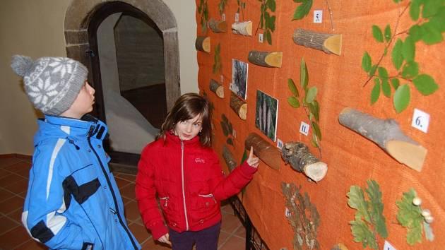 Výstava Stromy jako domy