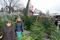 Trh s vánočními stromky kam míří stále více Čechů