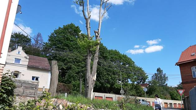 Nebezpečné stromy u hlavní silnice v Kraslicích po letech zmizely.
