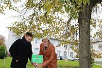 LÍPU SVOBODY označili pamětní tabulkou. Poukazuje na rok, kdy byl strom vysazen.