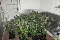 V rodinném domě odhalili policisté pěstírnu, zajistili 40 rostlin.