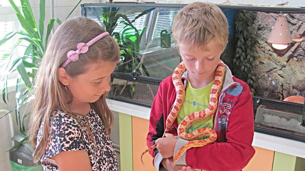 V rámci zájmového kroužku Chovatel se děti mohou věnovat péči o zvířata v přírodovědné stanici.